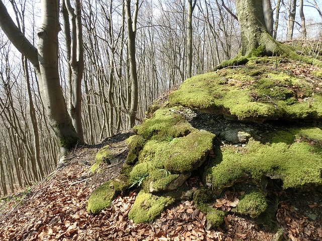 Forest, Mountains, Moss, Schaumburg, Weser Uplands