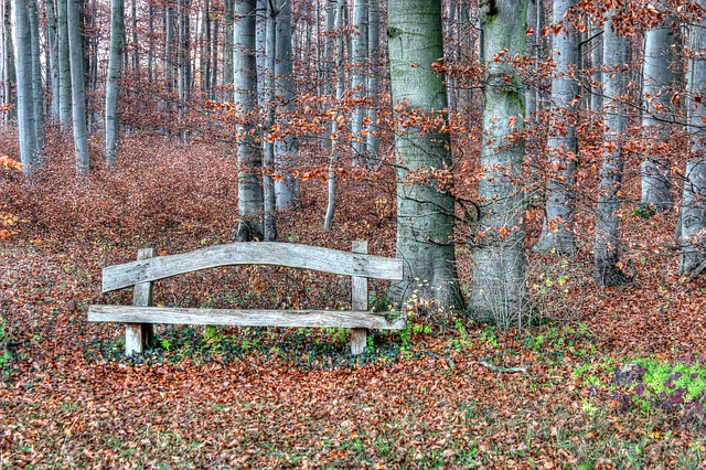 Bank, Wood, Idyll, Forest, Rest, Nature, Seat, Bench