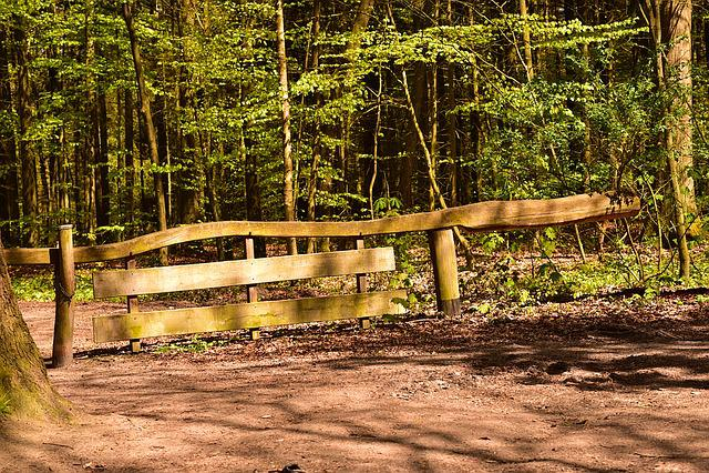 Forest, Goal, Input, Nature, Leaves, Landscape, Wood