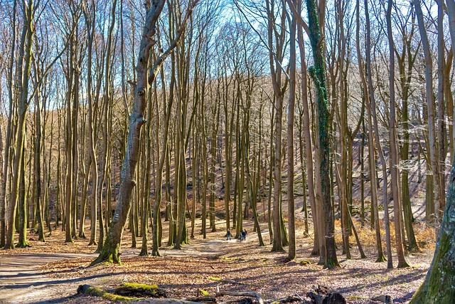 Wood, Nature, Landscape, Leaf, Forest, Rügen