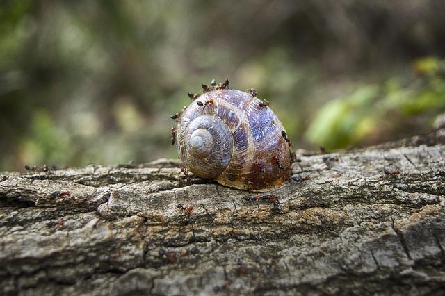 Snail, Trunk, Ants, Wood, Forest, Molluscum, Shell