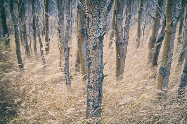 Trees, Long Grass, Forest, Woods, Rural, Nature