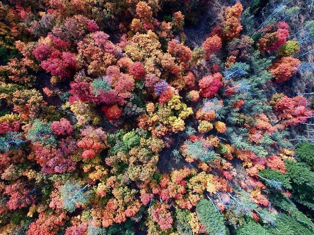 Aerial, Trees, Woods, Forest, Drone, Green, Orange