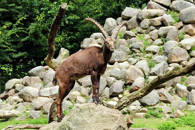 Zoo, Lüneburg Heath, Animal, Forest, Aries, Capricorn