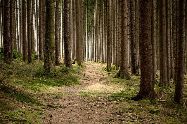 Forestry, Nature Conservation, Forest, Nature, Trees