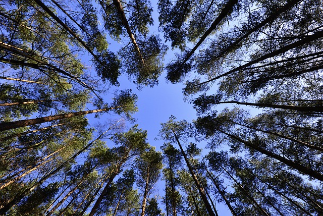 Forests, Sky, Foliage, From The Bottom Of The, Green