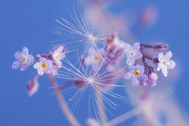 Forget Me Not, Flower, Spring Flowers, Pointed Flower