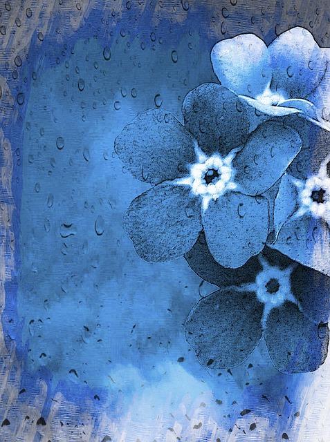 Vergissmeinnicht, Forget-me-not, Myosotis, Blue, Flower