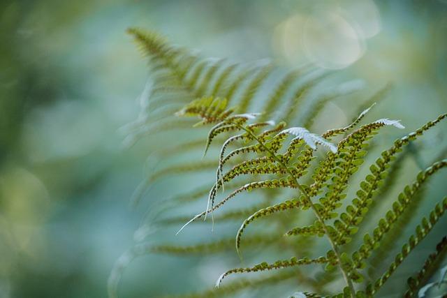 Fern, Green, Forrest, Garden, Plant