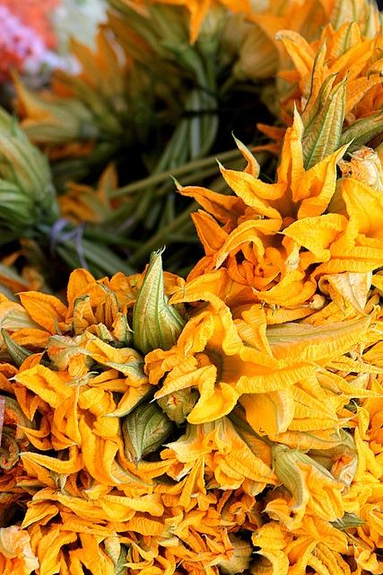 Flowers, Garden, Fortin, Squash Blossom