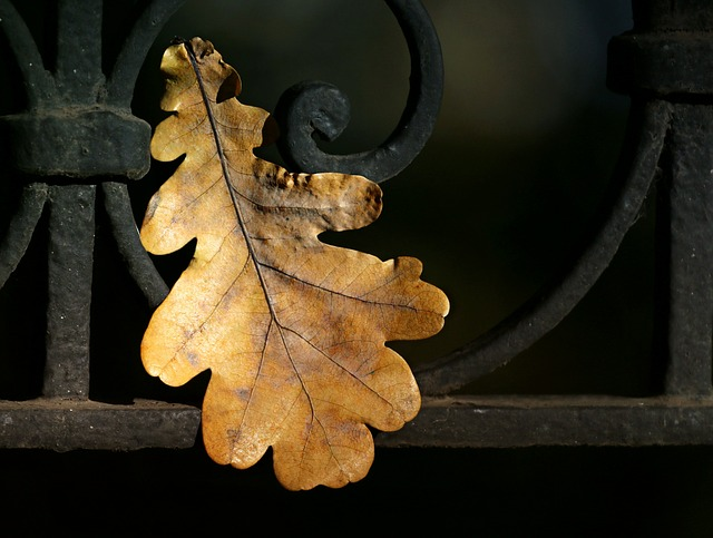 Leaves, Oak, Autumn, Fence, Fall, Power, Fortress