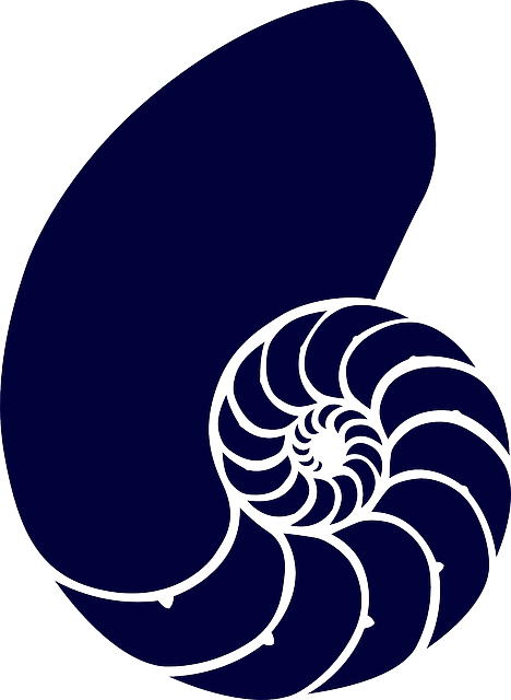 Shell, Sea, Blue, Spiral, Navy, Dark, Animal, Fossil