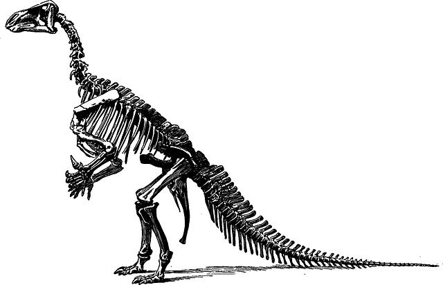 Tyrannosaurus, Dinosaur, Fossil, Paleontology, Skeleton