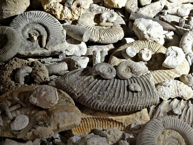 Fossils, Prehistory, Ammonites, The Museum