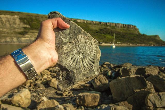 Fossil, England, Coast, Ocean, Ammonite, Fossils