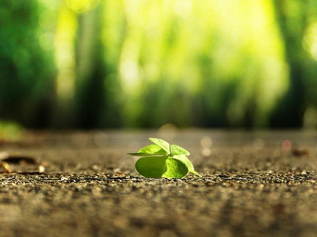 Four Leaf Clover, Road, Green, Light Green, Luck