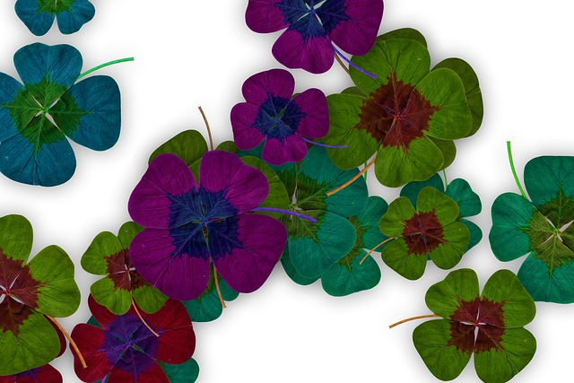 Four Leaf Clover, Leaves, Nature, Foliage, Lucky Clover