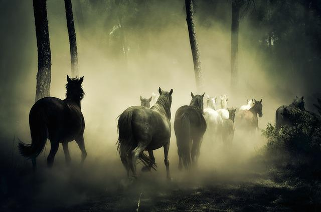 Horses, Animals, Nature, Four Legged, Herd Of Horses
