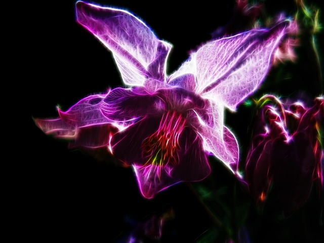 Fractalius, Columbine, Pink Flower, Light Pink, Close