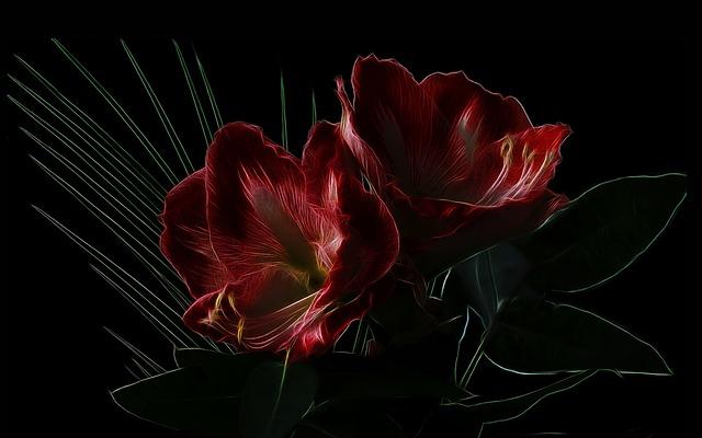 Fractalius, Photo Art, Knights Star, Amaryllis, Flower