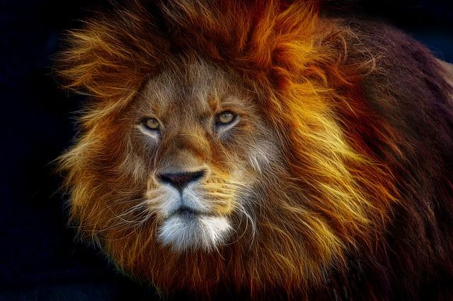Fractalius, Big Cat, Animal, Animal World, Lion, Mane