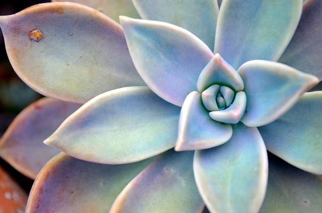 Succulent Plant, Star, Fractals