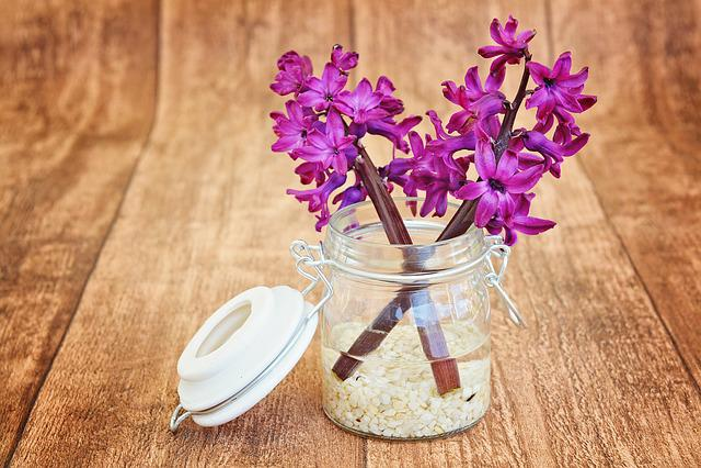 Hyacinth, Flowers, Pink, Fragrant, Fragrant Flower