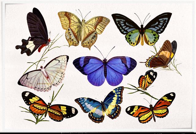 Vintage, Butterflies, Colourful, Label, Classic, Frame