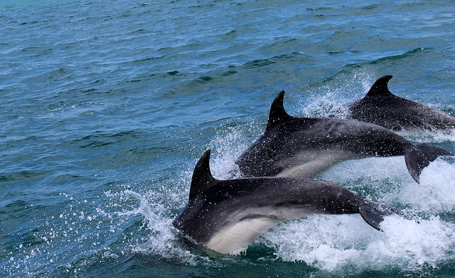 Dolphins, Marine Mammals, Water, Jump, Blue, Free