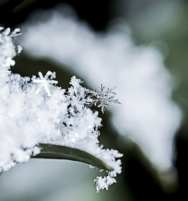 Snowflake, Frozen, Freezing, Ice, Season, Snow, Snowing