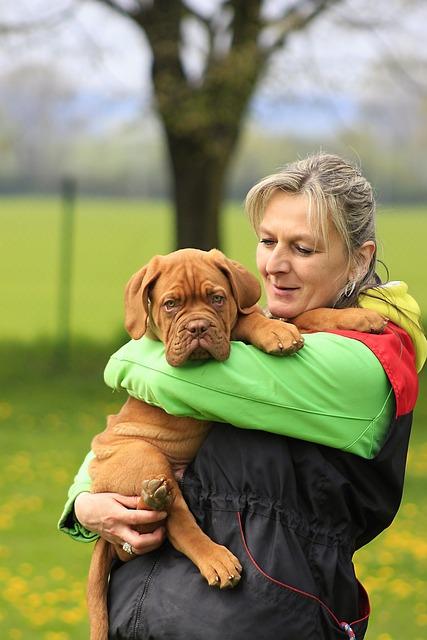 Bordeaux, Dog, Dogue, Mastiff, De, French, Sunny, Brown