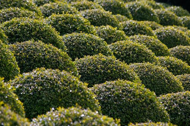 Boxwood, Garden, Bushes Carved, French Garden