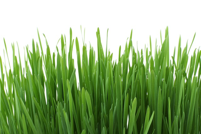 Background, Close-up, Flora, Fresh, Garden, Grass