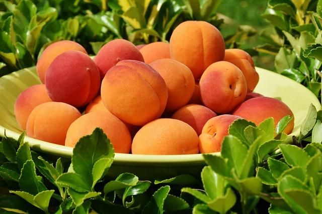 Peaches, Fruits, Bowl, Fruit Bowl, Fresh, Harvest