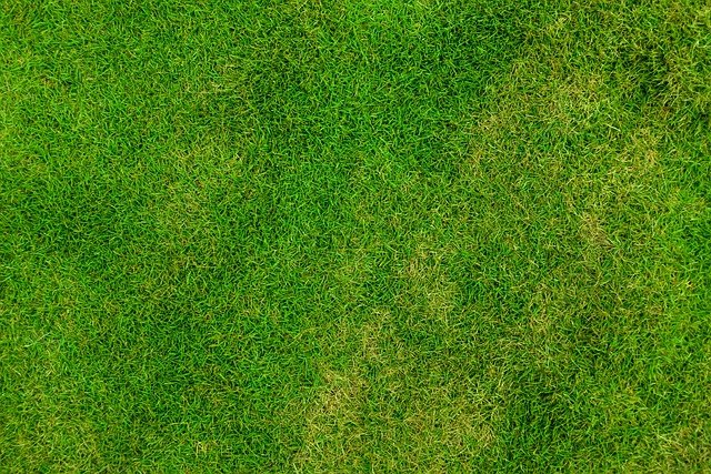 Grass, Lawn, Backdrop, Background, Field, Fresh, Green