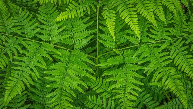 Bracken, Plants, Nature, Leaf, Green, Fern, Fresh