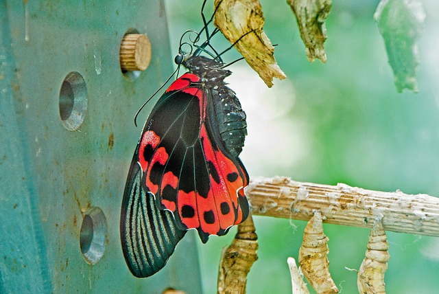 Butterfly, Freshly Hatched, Wilhelma, Stuttgart