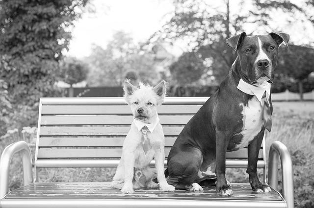 Wedding, Dogs, Groomsmen, Friend, Animal, White, Black