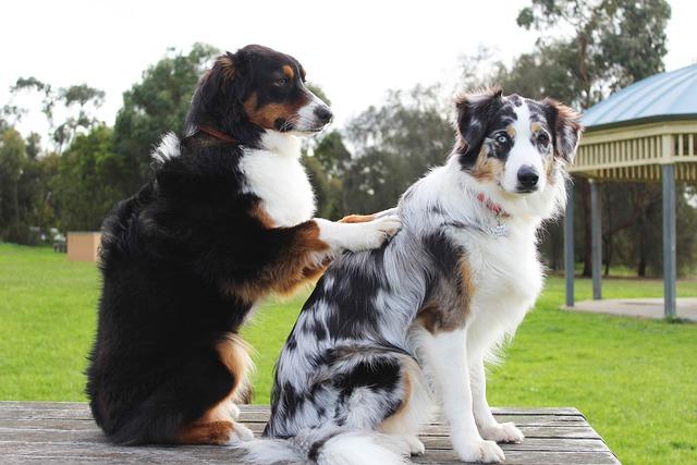 Massage, Dogs, Friends, Bestfriends, Pet, Treatment
