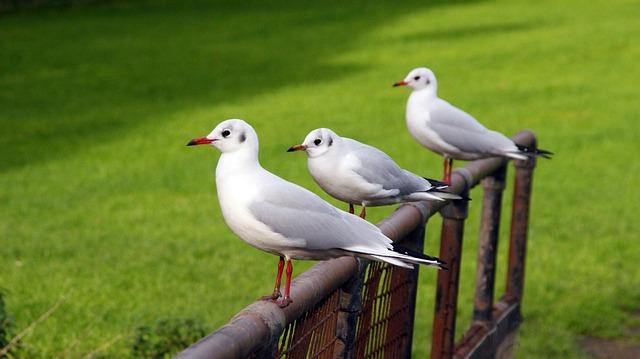 Bird, Nature, Grass, Outdoors, Wildlife, Friendship
