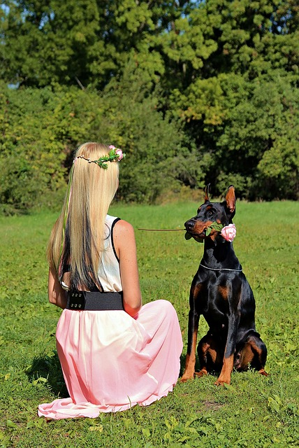 Doberman, Dog, Rose, Blonde Girl, Friendship, Love