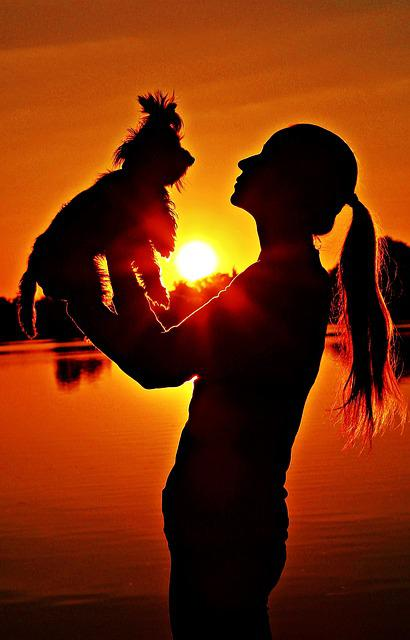 Yorkie, Woman, Silhouette, Sunrise, Love, Friendship