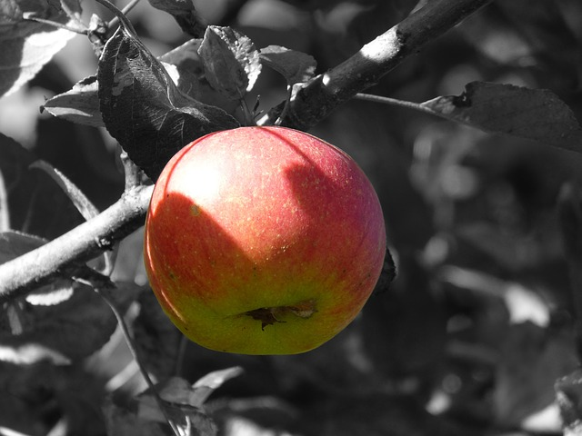 Apple, Fruit, Apple Tree, Frisch, Red, Vitamins, Food