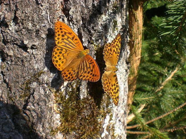 Butterflies, Log, Orange, Forest, Fritillary