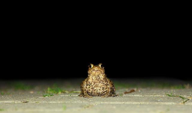 Toad, Nature, Frog, Animal, Amphibians, Animal World