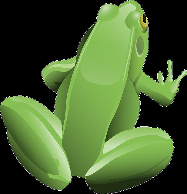 Frog, Amphibian, Animal, Green, Tree Frog