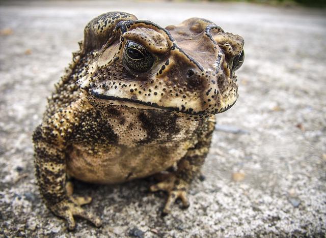 Frog, Toad, Urmonster