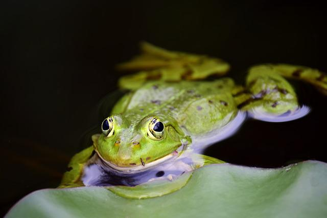 Frog, Green, Green Frog, Pond, High, Water, Frog Pond