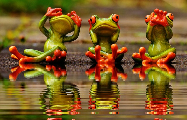 Not See, Not Hear, Do Not Speak, Frogs, Cute, Funny