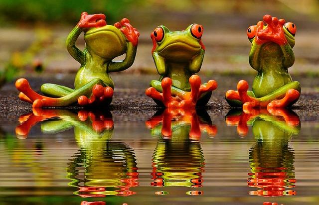 Not See, Not Hear, Do Not Speak, Frogs, Cute, Funny